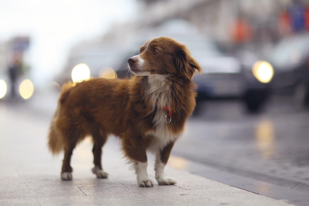 Potrącenie psa a uszkodzony samochód – kto odpowiada za szkody?