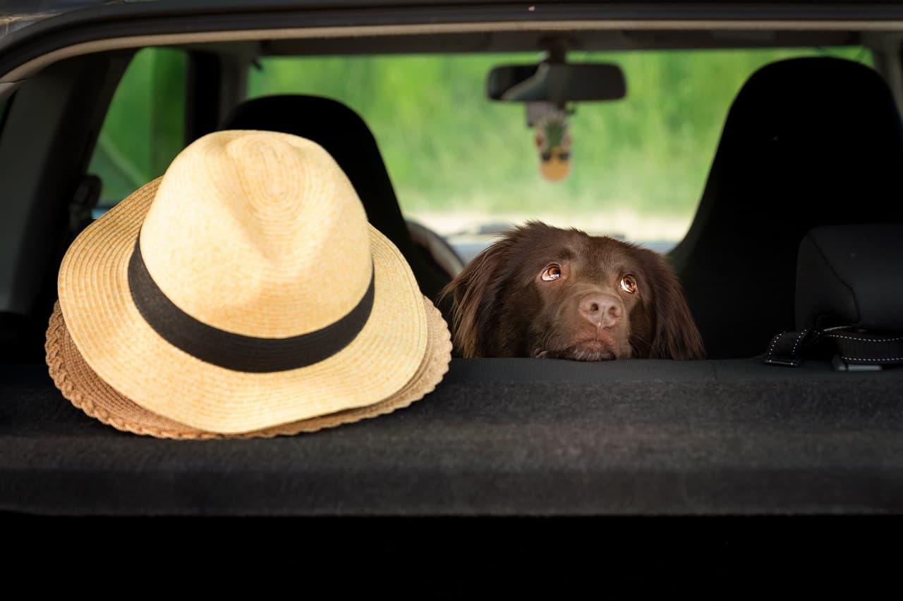Jak przewozić psa w samochodzie – zadbajmy o naszych pupili w czasie podróży